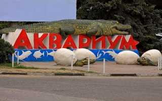 Алуштинский аквариум – удивительные приключения в мире морской фауны