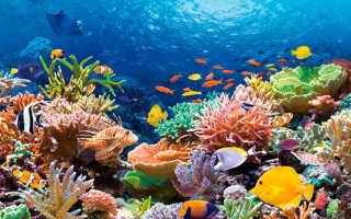 Большой барьерный риф (15 фото, описание, карта)