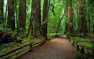 Редвуд – национальный парк в Америке