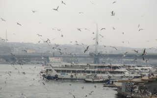 Отдых в Стамбуле в январе 2020 (погода, цены, отзывы туристов)
