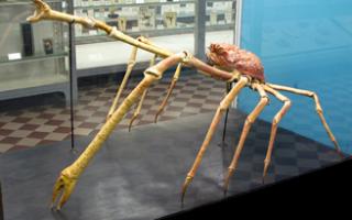 Музеи естественных наук Санкт-Петербурга